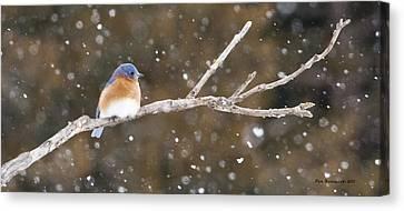 Snowy Bluebird Canvas Print