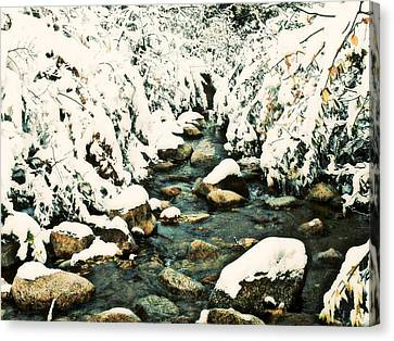 Snowy Creek Canvas Print