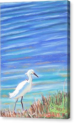 Snowy Egret At Sanibel Island Canvas Print