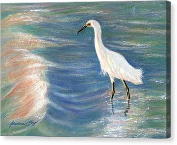 Snowy Egret At Sunset Canvas Print by Jeanne Kay Juhos