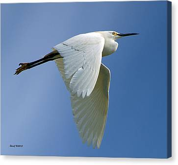 Snowy Egret Fly-by Canvas Print by Stephen  Johnson
