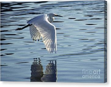 Canvas Print featuring the photograph Snowy Egret In Flight by Craig Lovell