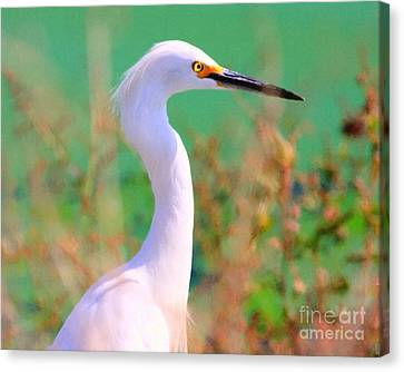 Snowy Egret . Painterly Canvas Print by Wingsdomain Art and Photography
