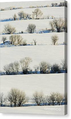 Snowy Landscape Canvas Print by Jeremy Woodhouse