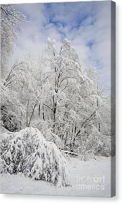 Snowy Landscape Canvas Print by Len Rue Jr and Photo Researchers