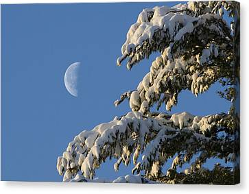 Snowy Moon Canvas Print