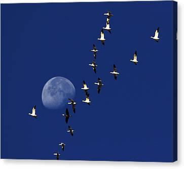 Waning Moon Canvas Print - Snowy Moon by Tony Beck
