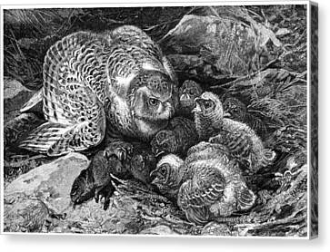Snowy Owl And Chicks, 19th Century Canvas Print by