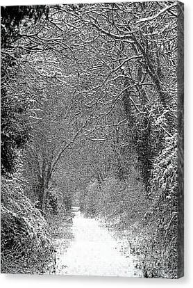 Snowy Path Canvas Print by Linsey Williams