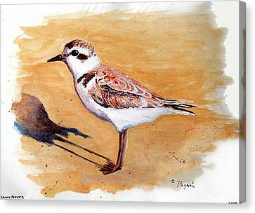 Snowy Plover Canvas Print