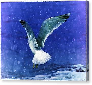 Snowy Seagull Canvas Print by Debra  Miller