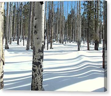 Snowy Shadows Canvas Print