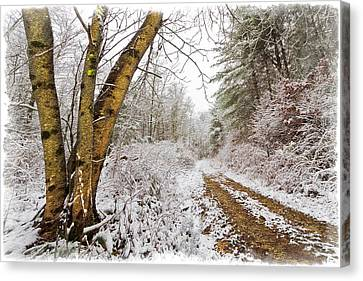 Snowy Watercolor Canvas Print by Debra and Dave Vanderlaan