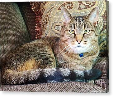 Blending Canvas Print - Snugs In Camoflage by Judy Via-Wolff
