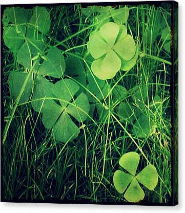 Canvas Print featuring the photograph So Lucky by Robin Dickinson