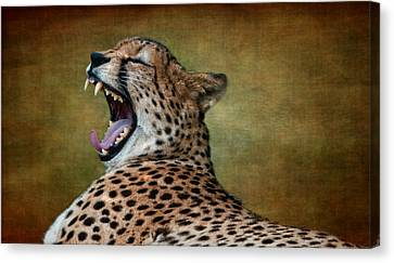 So Tired Canvas Print by Heather Thorning