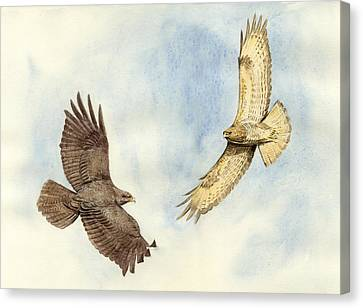 Soaring Buzzards Canvas Print by Chris Pendleton