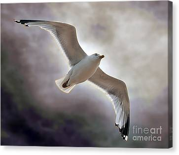 Soaring Canvas Print by Graham Taylor