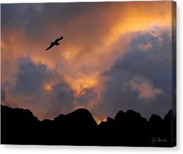 Soaring In The Midnight Sun Canvas Print by Joe Bonita