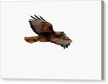 Soaring Peacefully Canvas Print
