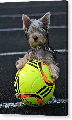Soccer Dog Canvas Print by Dawn Moreland