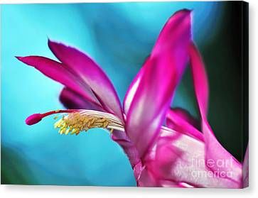 Soft And Delicate Cactus Bloom 3 Canvas Print