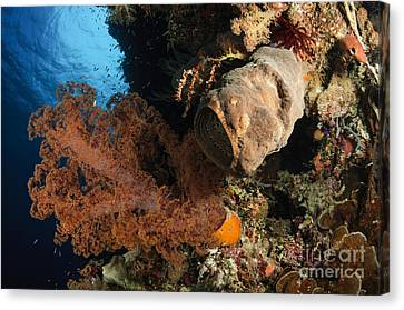 Soft Coral Seascape, Indonesia Canvas Print by Todd Winner