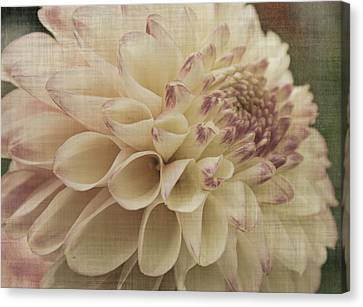 Soft Lady Canvas Print by Terrie Taylor