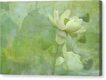 Soft Lillies Canvas Print by Carolyn Dalessandro