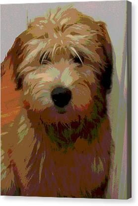Soft Wheaten Terrier Canvas Print