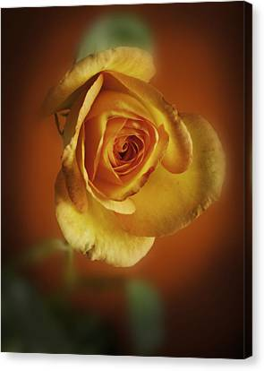 Soft Yellow Rose Orange Background Canvas Print by M K  Miller