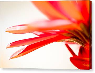 Softly Red Canvas Print
