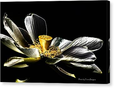 Canvas Print featuring the photograph Solarized Lotus A by Travis Burgess
