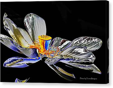 Canvas Print featuring the photograph Solarized Lotus B by Travis Burgess