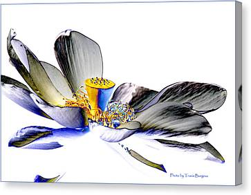 Canvas Print featuring the photograph Solarized Lotus C by Travis Burgess