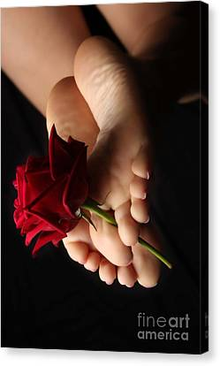 Sole Rose Canvas Print by Tos Photos