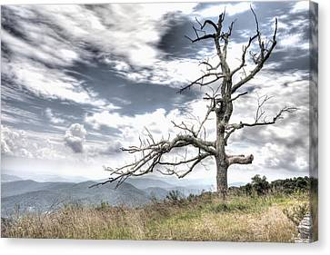Solemn Tree Canvas Print by Michael Clubb