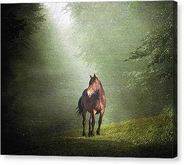 Solitary Horse Canvas Print by Christiana Stawski