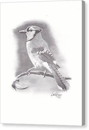 Bluejay Canvas Print - Solitary Jay by Lou Knapp