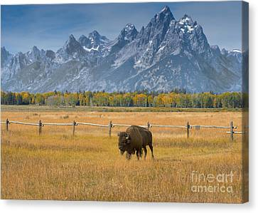 Solitary Moments Canvas Print by Sandra Bronstein