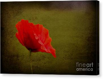 Canvas Print featuring the photograph Solitary Poppy. by Clare Bambers