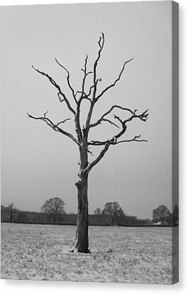 Solitude Canvas Print by Michael Standen Smith