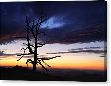 Something Wicked This Way Comes Canvas Print by Metro DC Photography
