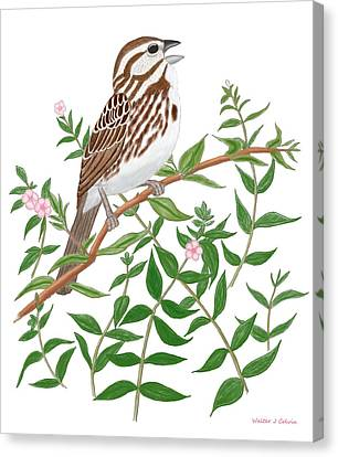 Song Sparrow Canvas Print by Walter Colvin
