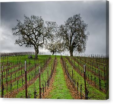 Sonoma County Vineyard Canvas Print by Joan McDaniel