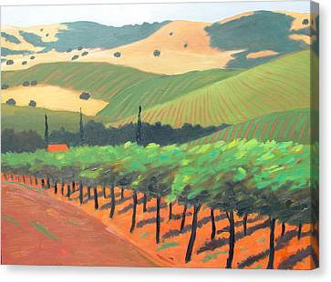 Sonoma Vinyard Canvas Print by Gary Coleman
