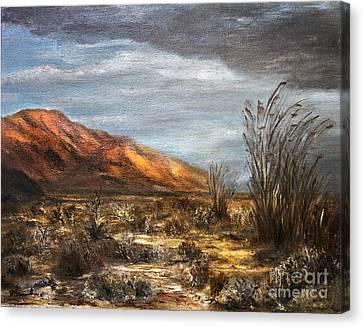 Sonora Desert Canvas Print by Danuta Bennett