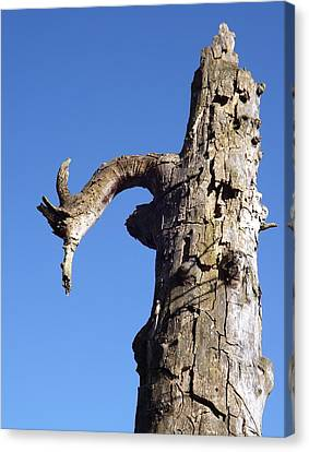 Canvas Print featuring the photograph Soul Of The Wood Pecker by Gerald Strine