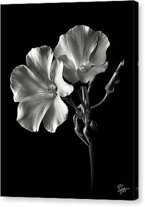 Sour Grass In Black And White Canvas Print