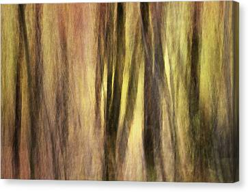 Sourwoods In Autumn Abstract Canvas Print by Rob Travis